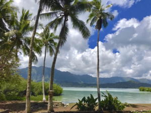 フィールドスタディA「ハワイの環境問題」参加者募集中!